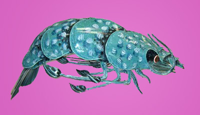 BigHonkinShrimp-featured